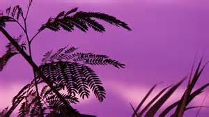 Solidarity: A Purple Day